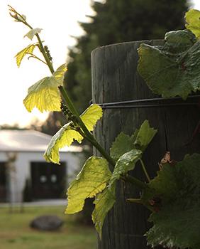 Omarino Wine Park vineyard